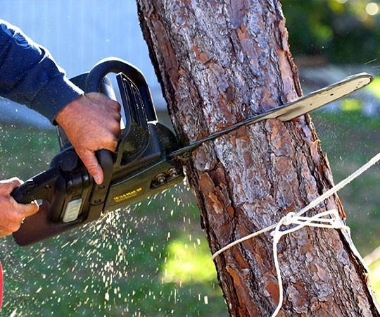 Спил деревьев в Тольятти и Самарской области