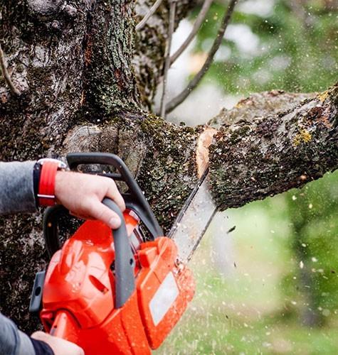 Услуга по спиливанию деревьев в Тольятти
